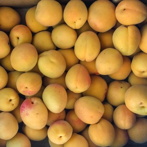 citadella schulfrucht: aprikosen